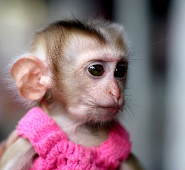 Прикольная обезьяна.jpg
