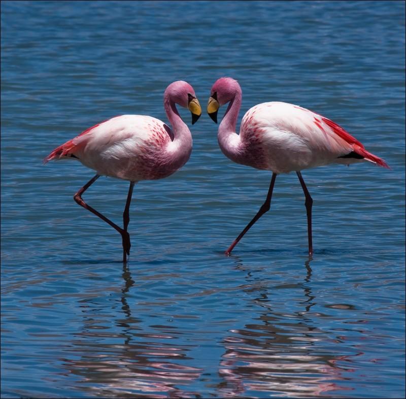 фламинго.jpg